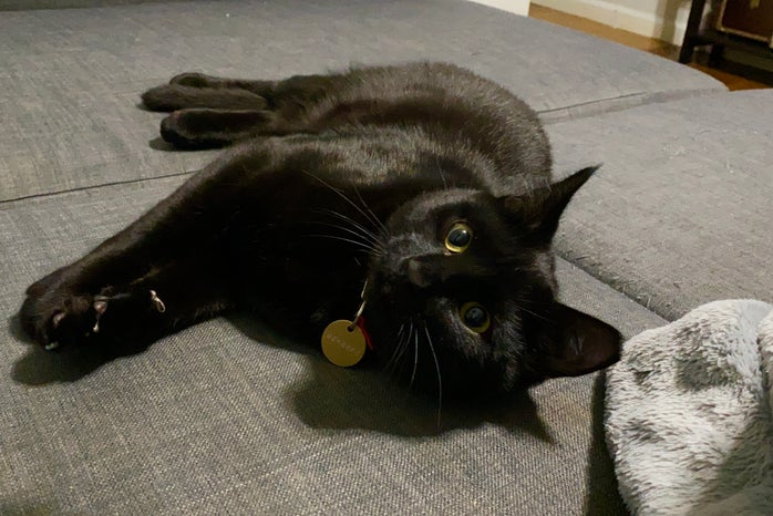 Black Cat laying on side.