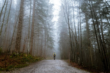 Person standing between tall trees surrounded by fog