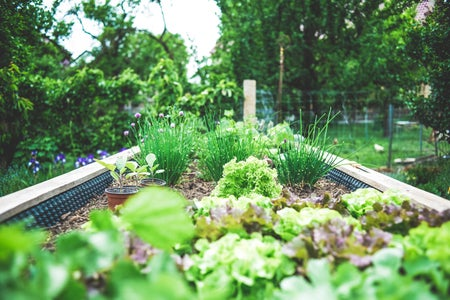 Garden, plant: Urban Gardening in raised bed – herbs and salad breeding upbringing. Self supply & self-sufficiency.
