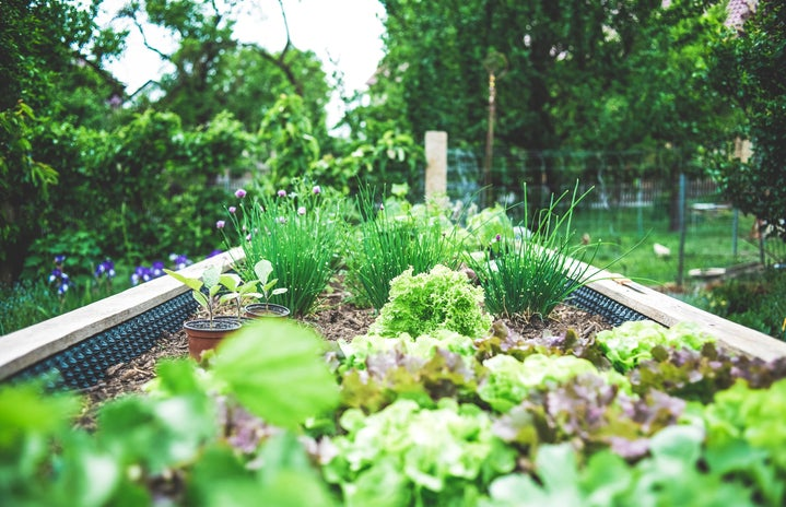 Garden, plant: Urban Gardening in raised bed – herbs and salad breeding upbringing. Self supply & self-sufficiency.