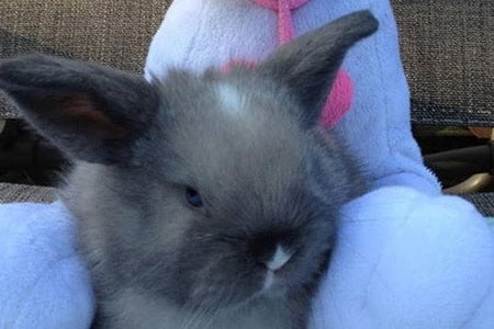 Baby rabbit sitting in front of a soft toy