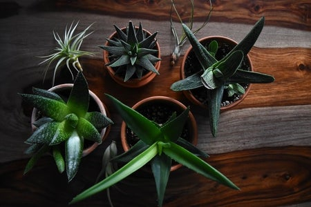 house plants on table