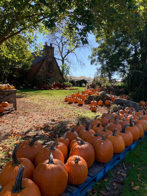 Row of pumpkins with a house in the background