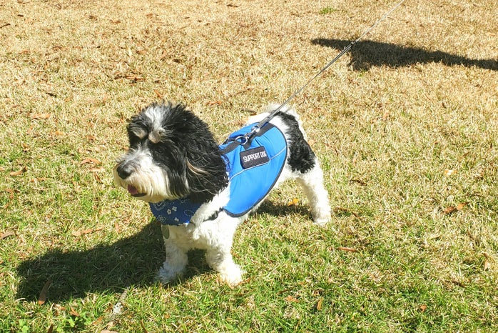 Dog of a HCSC member