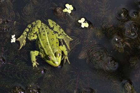Frog in rainforest