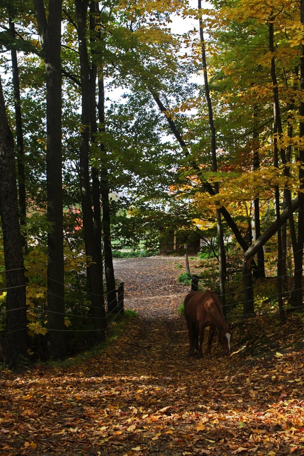 Chestnut Horse on a path