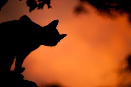 Cat against orange sky