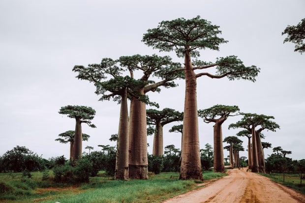 trees near pathway in madagascar