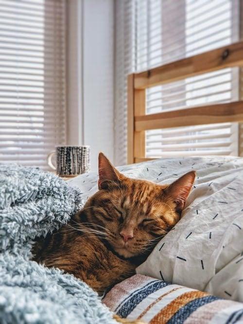 cat asleep in bed