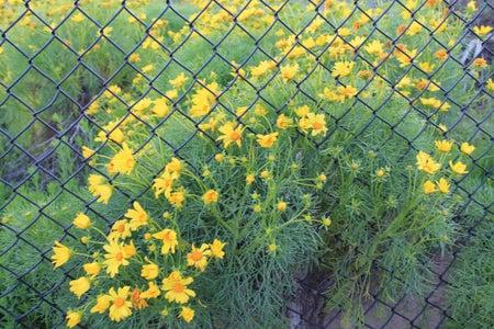 flowers fence bright summer happy fun
