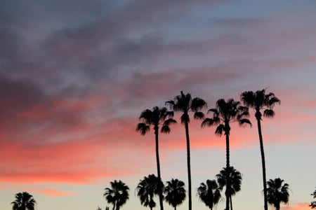 palm trees sunset pink sky fun adventure original