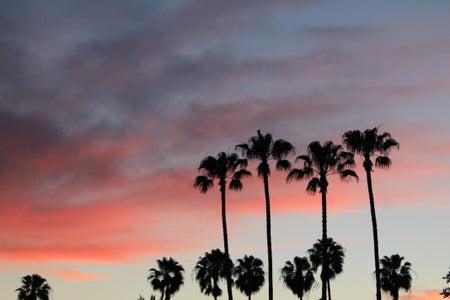 palm trees sunset pink sky fun adventure original