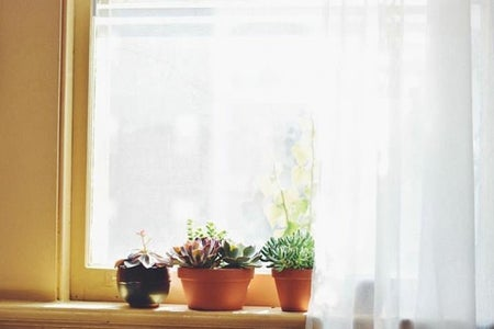 window sun curtains plants apartment