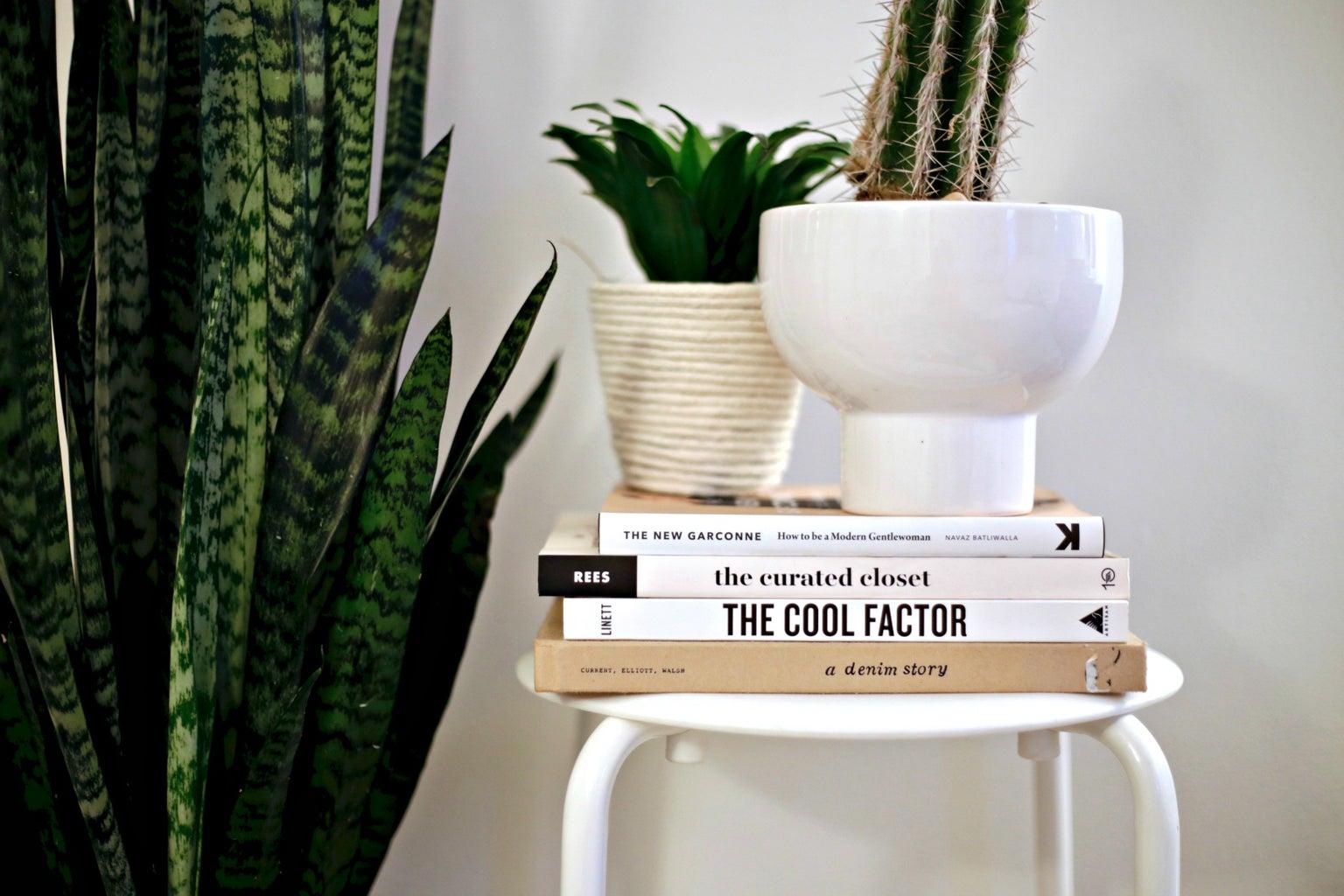 book fashion plants minimal cactus cacti cool style