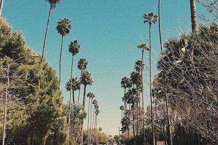 Palm Trees California Street Blue Skies