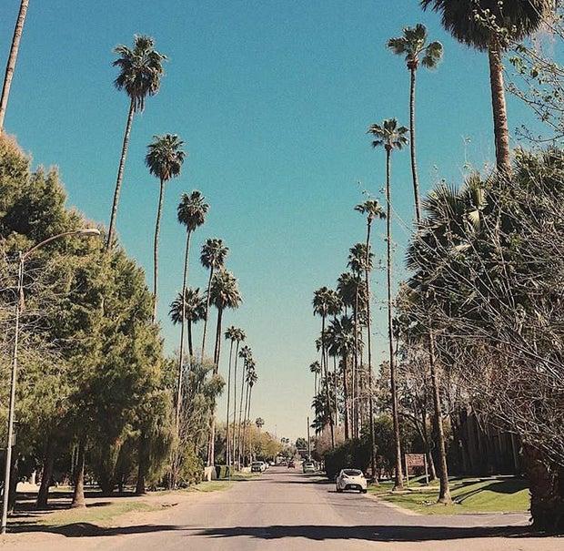 Palm Trees California Street Blue Skies