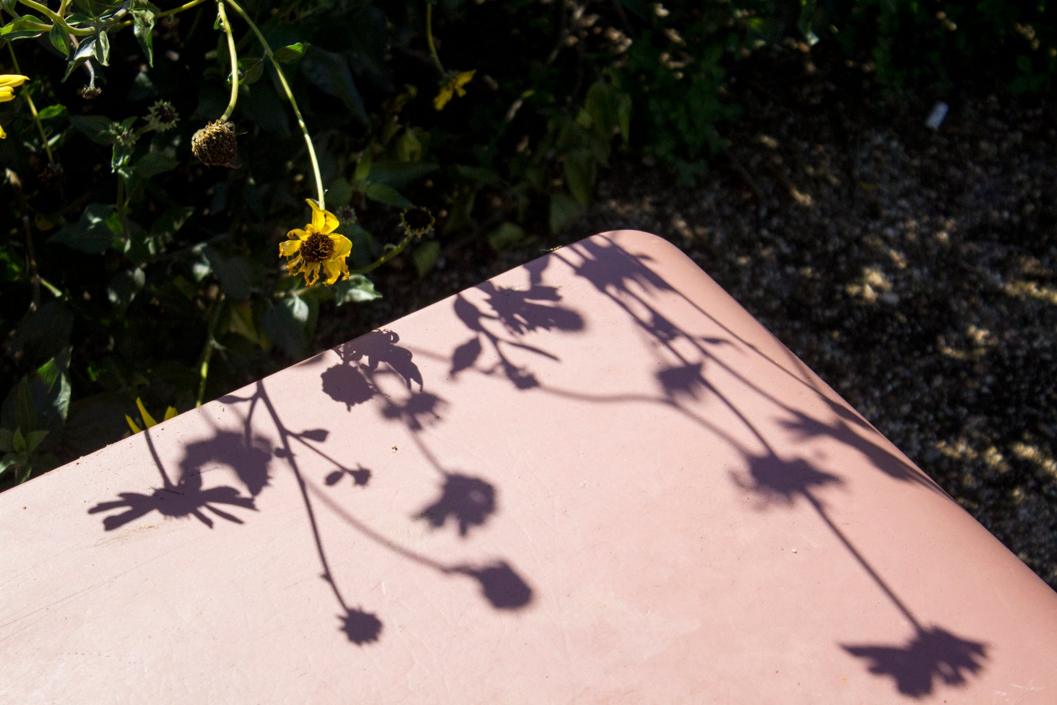 Floral Sunflower Shadows Outdoor Reflective Plants High Res Version