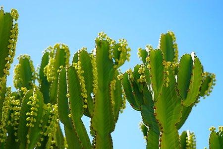 Cameron Smith-Cacti Blue Sky