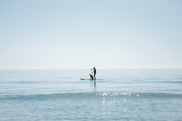 Cameron Smith-Barcelona Spain Abroad Beach Water Sea Sunny Summer Paddleboard Dog Man Relax Blue.Jpg