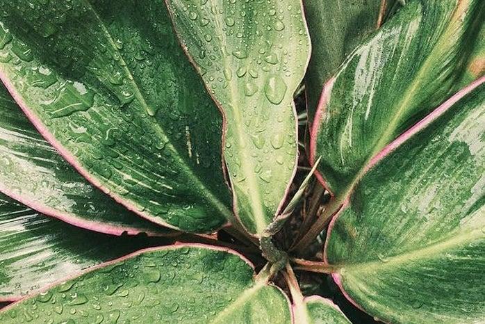 Rain Leaves Nature Green Plant