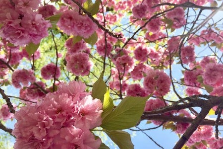 Spring Flowers Pink Summer Warm Weather Season Color Bloom Beautiful Trees Flowers Life Happy Bright Fun Outside Outdoors Calm