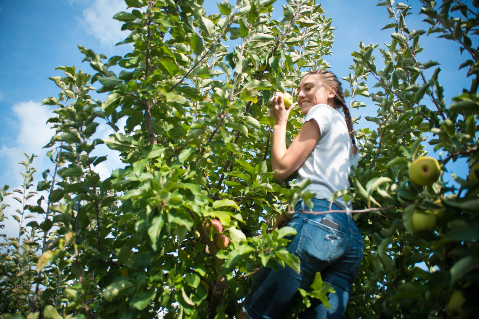 Apple Orchard Girl Picking Apples