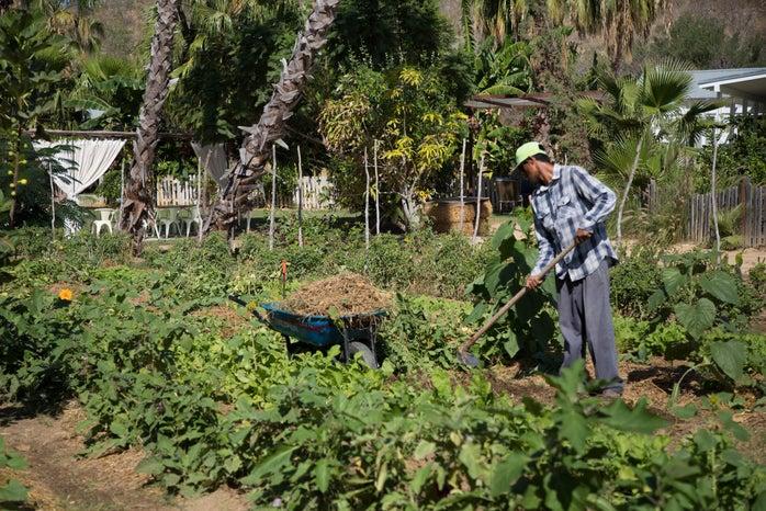 Male Farmer Farm