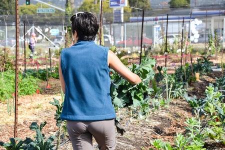 Girl Holding Produce Farm Rows