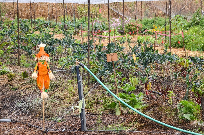 Farm Scarecrow