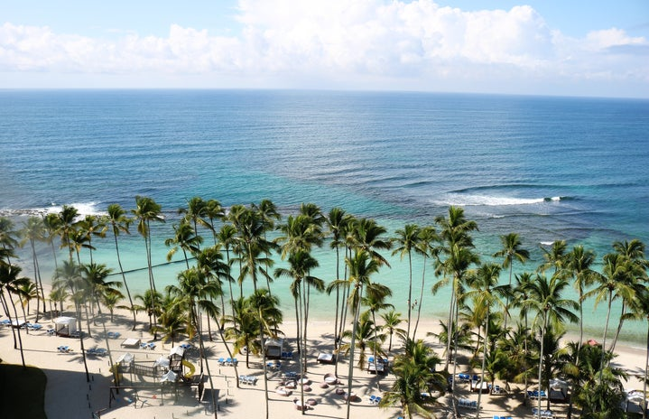 island palm trees