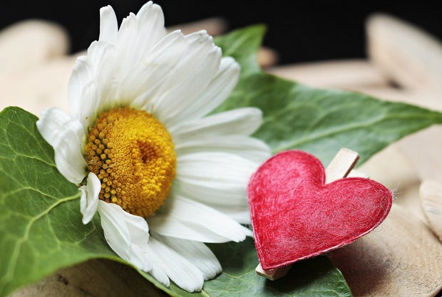 Flower with a heart clip next to it