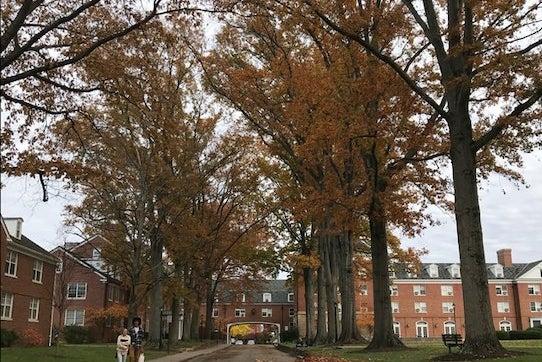 Ohio University Leaves Fall East Green