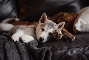 two dogs sleeping on the couch