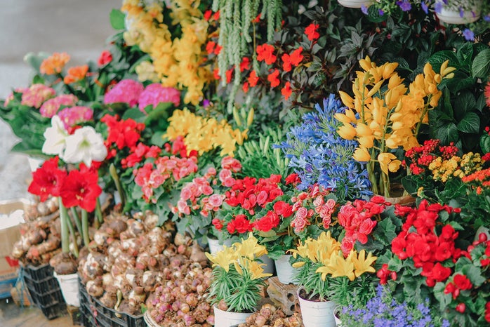assortment of flowers