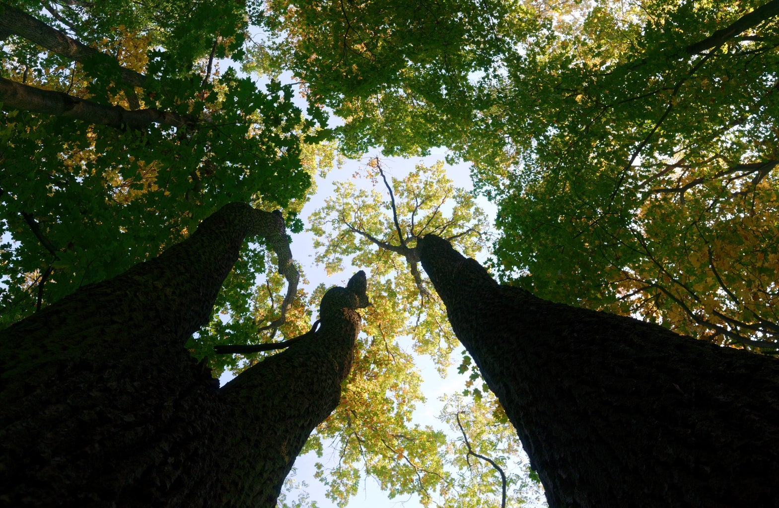 low angle of green trees