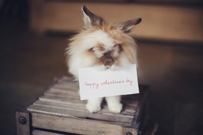 bunny holding card