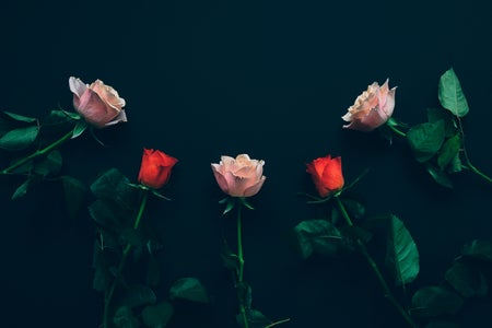 roses on black background