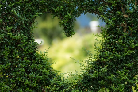 heart shape cut into a bush