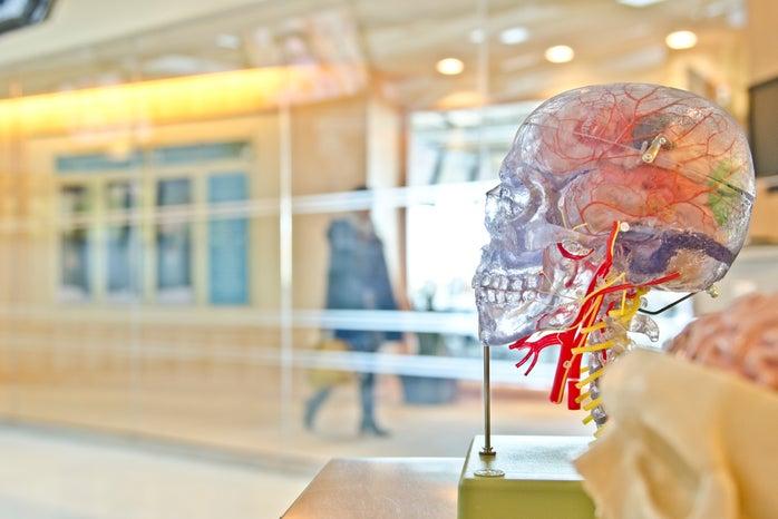 Brain photo for profile on a biopsychology professor