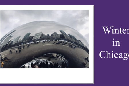 A picture I took of the Chicago bean plus my purple background