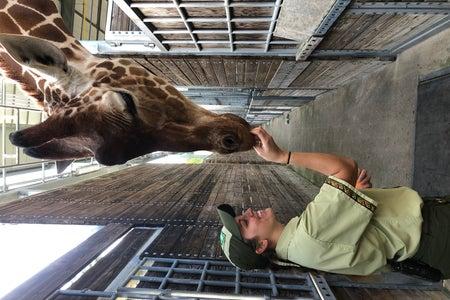 Tiara feeding giraffe