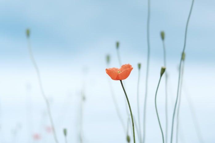 flower in sky