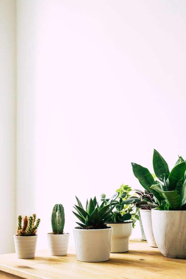 row of succulents