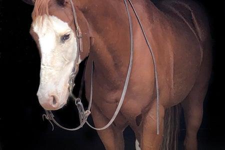 Headshot of Elmo the horse