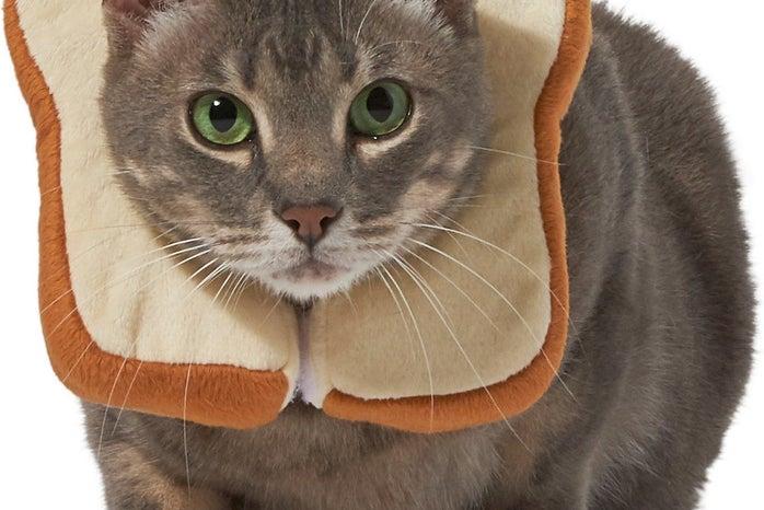 bread cat costume