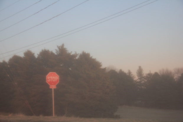 A stop sign with evergreen trees.
