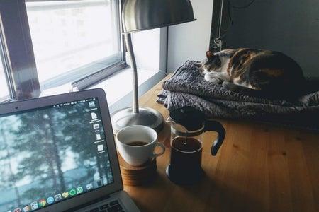 cat sleeping by window