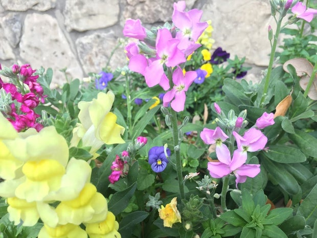 colorful flowers against a stone wall