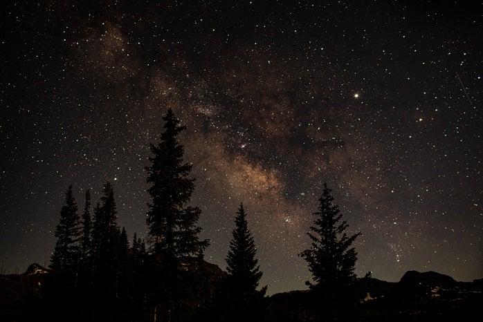 Stars behind tall trees