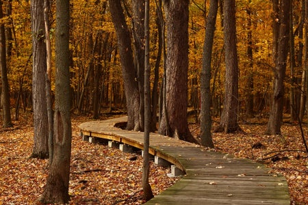 walkway through the woods in the fall